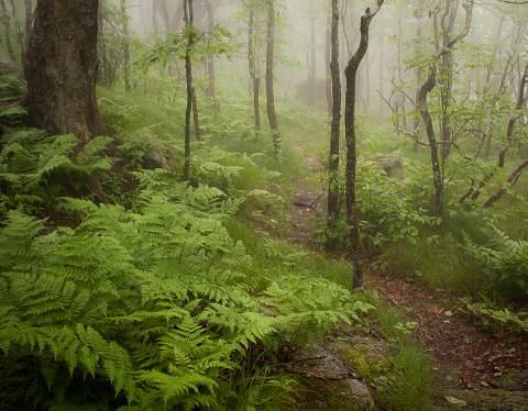 Greybeard-Mountain-Overlook-20120601-0006.jpg