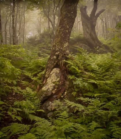 Greybeard-Mountain-Overlook-20120601-0025.jpg