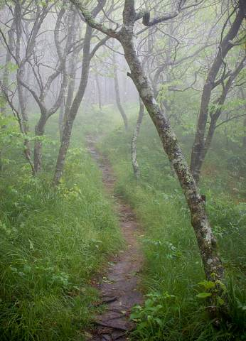 Greybeard-Mountain-Overlook-20120601-0050.jpg