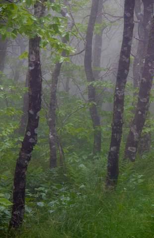 Greybeard-Mountain-Overlook-20120601-0069.jpg