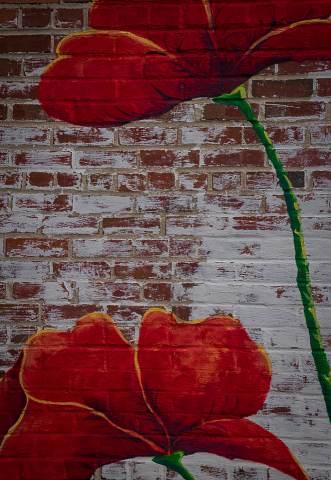 Brevard-Alleyways-20140915-0012.jpg