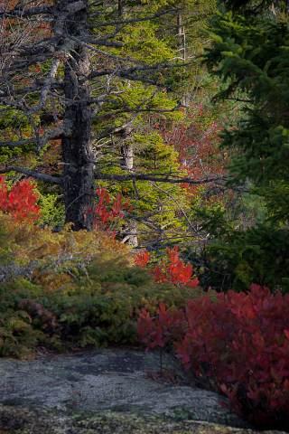 Acadia-20000101-093.jpg