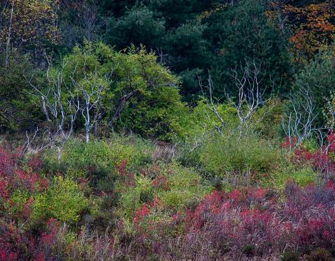 Acadia-20121016-053.jpg