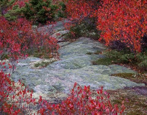 Acadia-20121019-066.jpg
