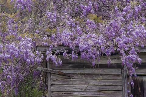 Callaway-Gardens-20090406-0199.jpg