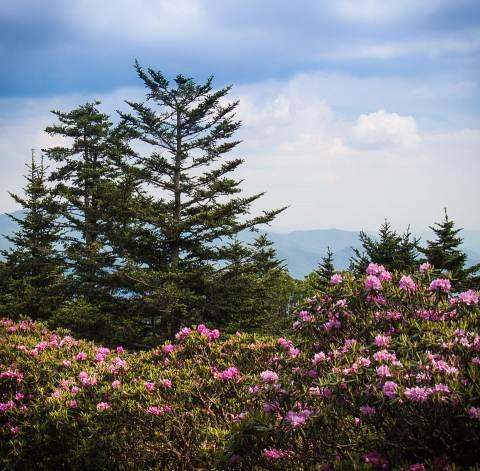 Roan-Mountain-20120613-027.jpg