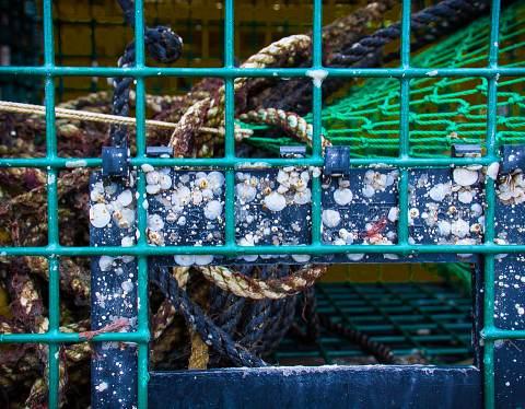 Acadia-20121014-165.jpg
